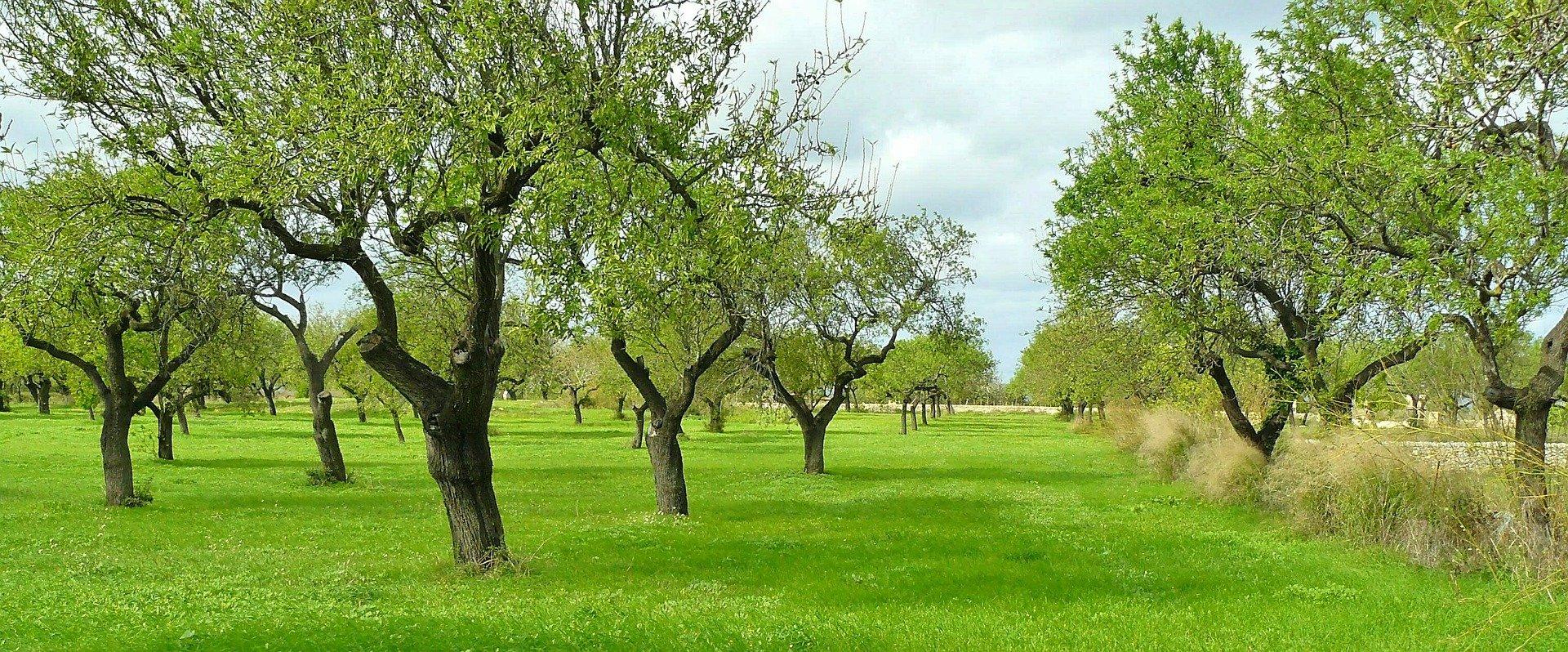 Pianta fitoprotezione matozzo giardini