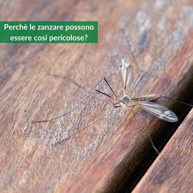 pericoli zanzare