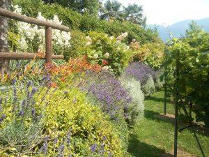 lavori svolti giardino