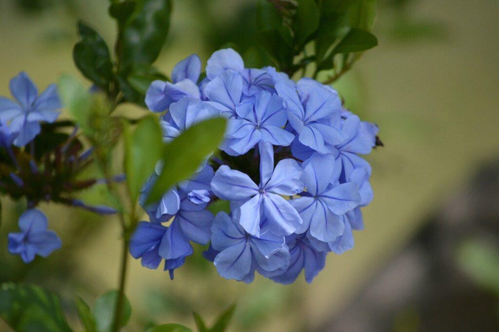 flowers-4776843_1280