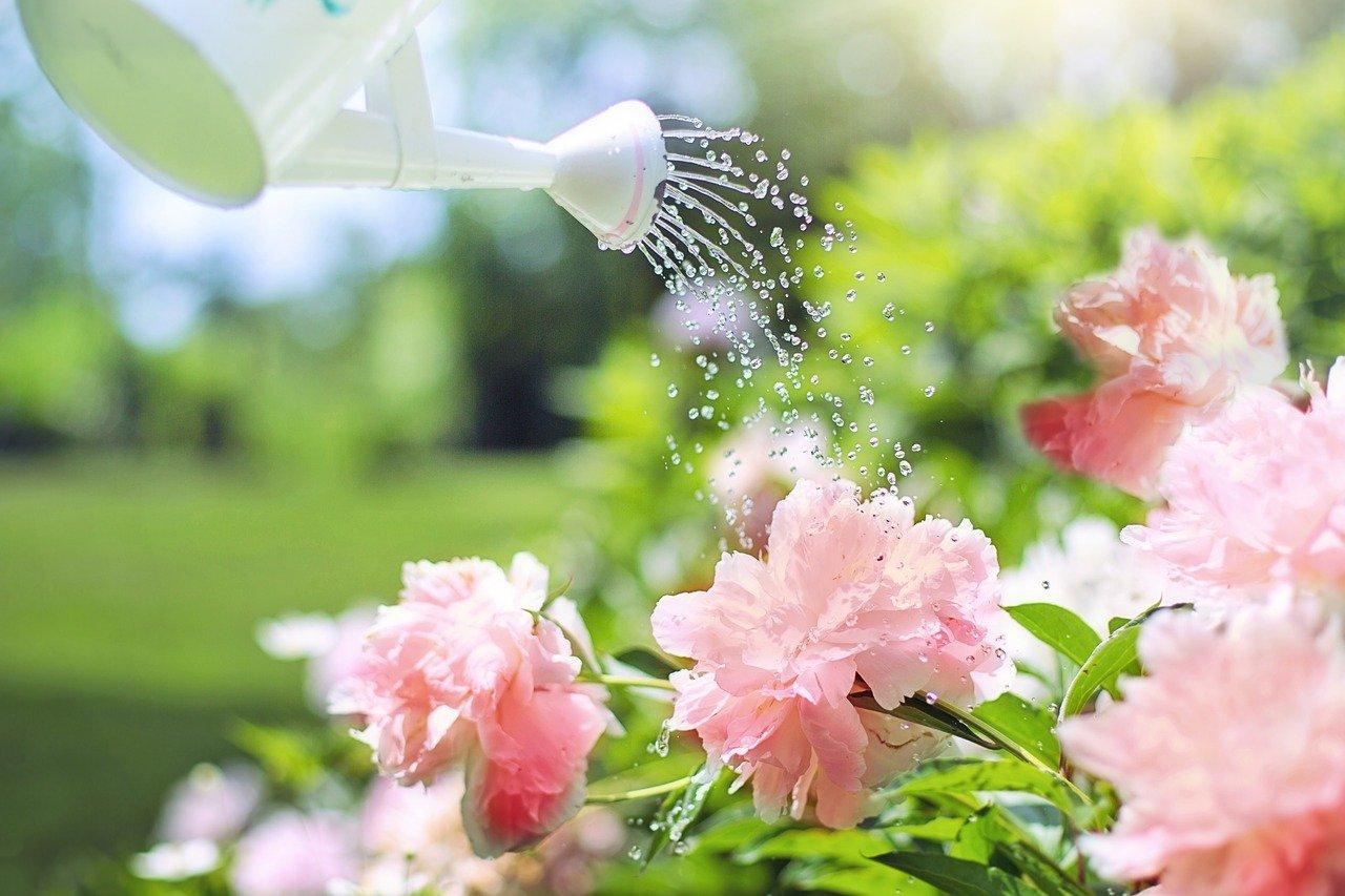 watering-2389940_1280