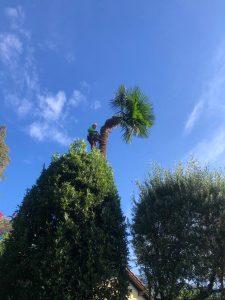 lavori giardino su palma matozzo giardni